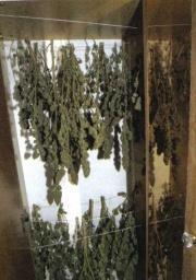 Egy szekrényben felaggatva, minimális szellőzés mellett is megszáradnak, de a bődületes szaggal számolni kell (450g)