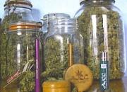 Befőttesüvegekben a fű tovább megőrzi potenciáját és aromáját