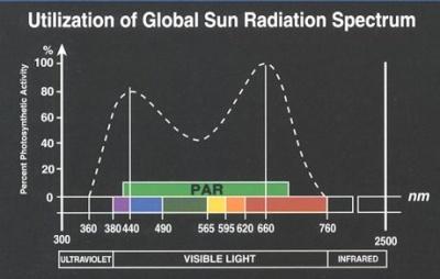A PAR 400-700nm hullámhossztartományban kibocsájtott fény mennyisége. A szaggatott vonal a fotoszintetikus aktivitást jelzi az adott hullámhosszon.