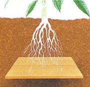 A gyökérzet alá tett fa/kartonpapír/újságpapír rétegek is lassítják a a víz alsóbb rétegekbe szivárgását.