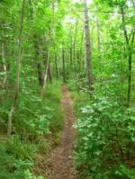 A kitaposott ösvények bárkit az ültetvényhez vezethetnek