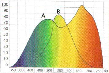"""A """"B"""" jelöli a szem által érzékelhető fényt, az """"A"""" a különböző hullámhosszúságú fény hatására kibocsájtott O2 mennyiségét figyelhetjük meg (nagyjából!). Minél több, annál jobban fejlődik a növény."""