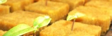 Zöldségtermesztés termesztőberendezésekben