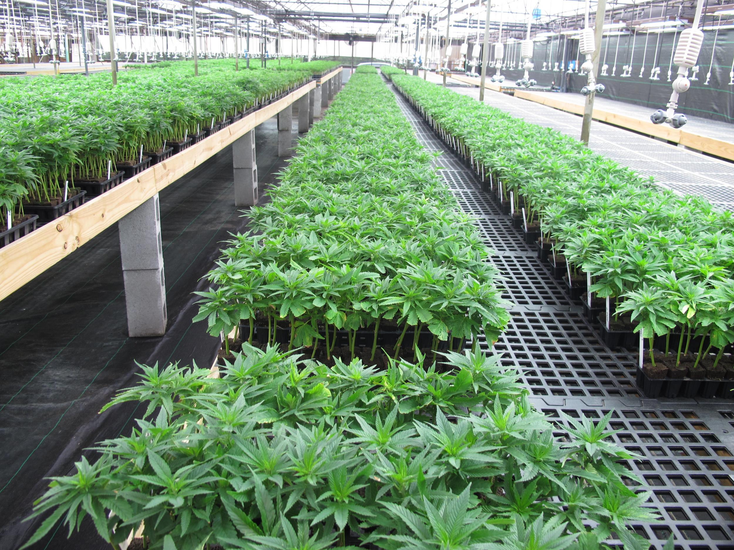 greenhouse3canhalverston