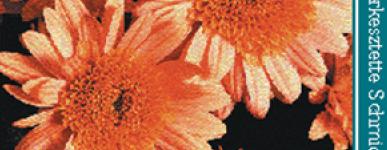 Növényházi dísznövények termesztése