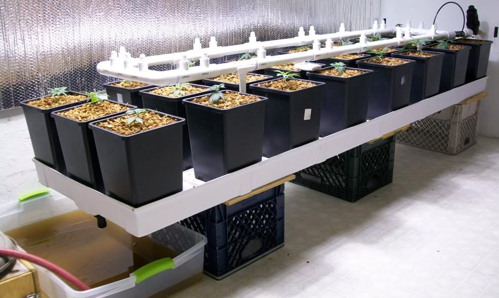 Egy draingyüjtő tálca rengeteg munkától megszabadít és a növények is hálásak.