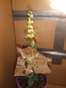 Egy doboz a szélcsend miatt és némi fólia a növény alá.