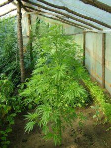 foliasatorfdsa
